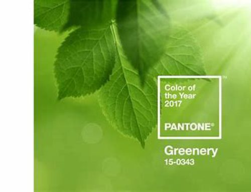 2017 Color of the Year: Pantone Greenery and Benjamin Moore Shadow